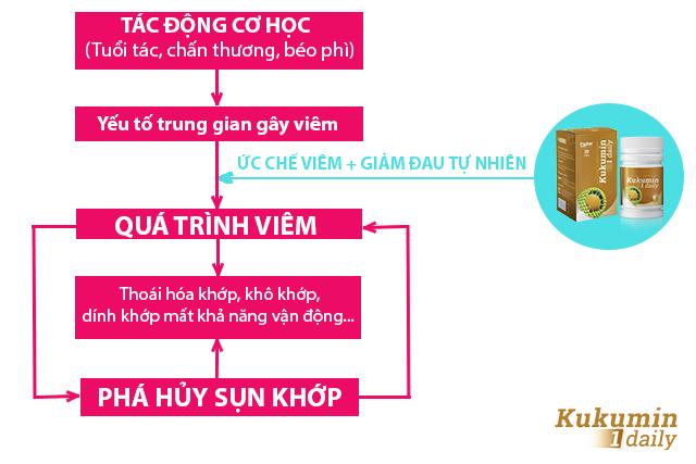 Cơ chế chống viêm khớp, giảm đau khớp của Kukumin 1 Daily